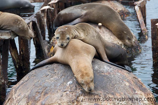 redondo beach sea lions
