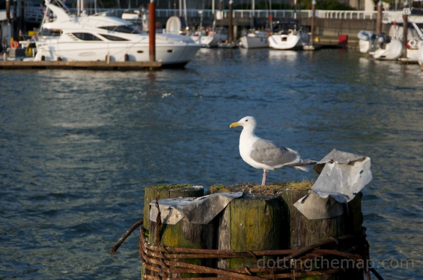 Seagulls at Granville Island