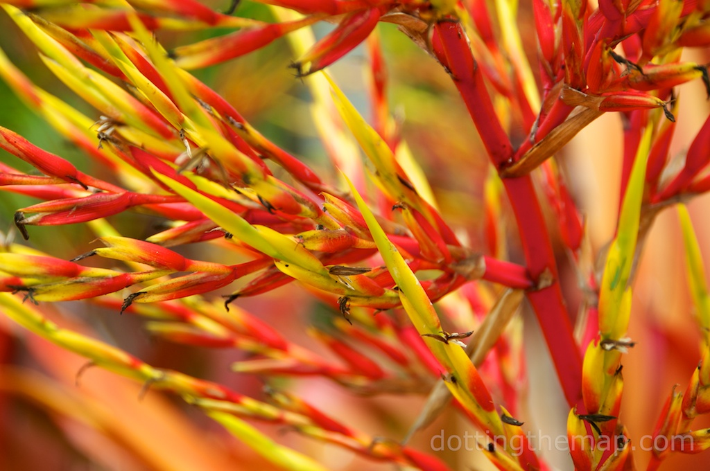 Hawaiian flower photo Heliconia