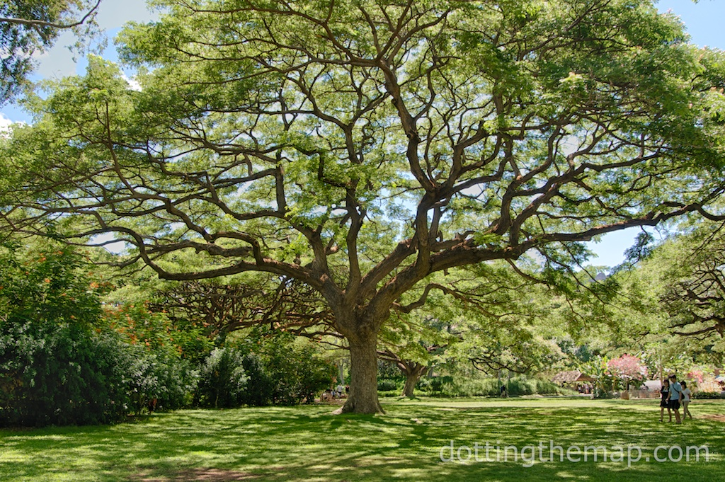 Tree at Honolulu Zoo