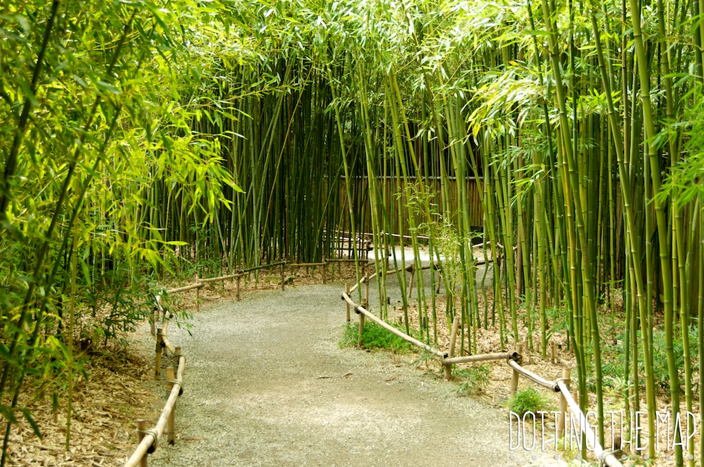 Bamboo trail at Cheekwood Botanical garden